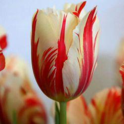 کندوی باغ هستی بی تو عسل ندارد بی تو کتاب عاشق ضرب المثل ندارد گفتا که بین خوبان مهدیست یا که یوسف گفتم که در دو عالم مهدی عج بدل ندارد