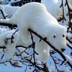 خرس قطبی درختی