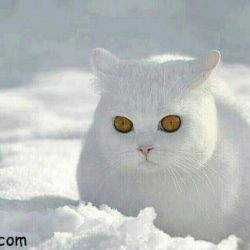 وقتی برف میبارد ... پولدار ک باشی برف بهانه ای میشود برای لباس نو خریدن، با دوستان به اسکی رفتن و تفریح کردن اما خدا نکند فقیر باشی و برف ببارد از بیکار شدن پدر کارگرت بگیر تا غم پاره بودن کفشهایت!!! خدایا چرا باید پول تعین کند برف نعمت است یا عذاب؟