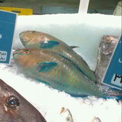 كی دلش میاد این ماهی قشنگو بخوره؟