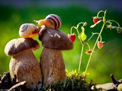 دنیای حلزون ها