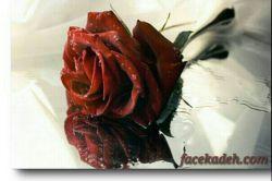 هدیه به دوستان عشقی با مرام