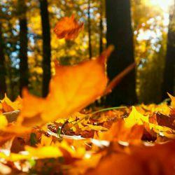شکوه پاییز