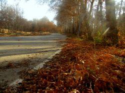 پاییز هزار رنگ - شــــاهرود.پارک شهدای محراب.پیست دوچرخه سواری