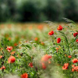 زلالترین شبنم شادی رابر لبانت ارزو دارم... نه برای امروزت،برای فردای هر روزت.... تقدیم به دوستان گلم