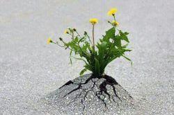 در بدترین شرایطها هم راهی وجود دارد،  اراده ات را قوی کن و به خدا توکل کن