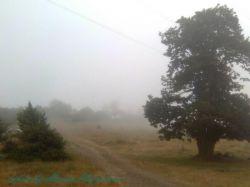 تصویر تار نیست اینجا جنگل ابره و همیشه ابری و پر از مه   بین شاهرود و ازادشهر