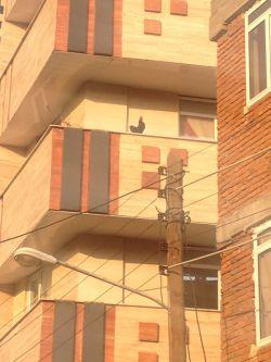 دیگه #خروس آپارتمانی ندیده بودم که دیدم:  تازه داشت کیف میکرد اون بالا میخوند:D