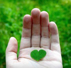 عشق را باید دید...عشق را باید یافت. عشق را میشود در شوق صدا پیدا کرد. عشق را میشود در عمق نگاه, در بطن بی پایان علف پیدا کرد..  من عشق را،در سایه ی شوق, هنگام صدای قدم یار از دور, در نسیم خنک نیمه شب تنهایی می بینم...