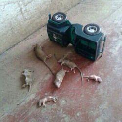 بر اثر واژگونی یک دستگاه خودرو در حوالی جاده ی گزدو متاسفانه شش نفر از اعضای یک خانواده جان خود را از دست دادند،خخخخخخخخخ