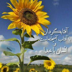 گل افتابگردان رو به نور می چرخد و  آدمی رو به خدا.... ما همه افتابگردانیم......... کامنت اول