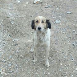این سگه هم باهامون اومد کوهنوردی