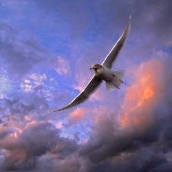میان پرواز تا پرتاب تفاوت از زمین تا آسمان است پرواز که کنی ، آنجا میرسی که خودت می خواهی پرتابت که کنند ، آنجا می روی که آنان می خواهند پس پرواز را بیاموز