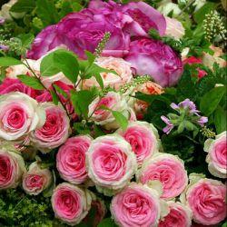 هر گز به امید فردا محبتها یمان را ذخیره نکنیم، چون ممکن است دیگر فردایی برایمان در کار نباشد.