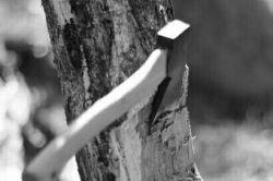 درخت دلتنگ تبر شد  وقتی پرنده ها سیم های برق را  به شاخه هایش ترجیح دادند...
