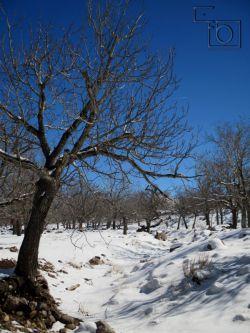 طبیعت زمستانی گوغر در سال 93