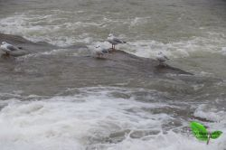 پرندگان/ساحل زیبای تنکابن