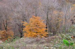 جنگل زیبای کردکوی/گلستان