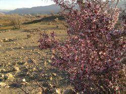 شکوفه در فصل زمستان