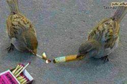 #طبیعت #طنز #پرنده #جوکر