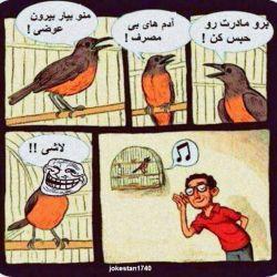 #بلبل #پرنده #طنز #خنده #جوکر #ترابی