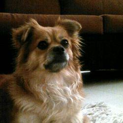 اینم سگم جسی