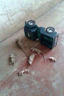 در اثرسرعت زیادو چپ شدن خودرو که باعث کشته و زخمی شدن یک خانواده شش نفره شده در جاده چالوس...