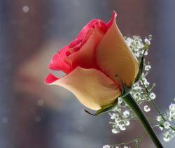 تقدیم ب گندم خانم با احترام... شما هم تقدیم کنین ب بهترین دوستای لنزوریتون... §