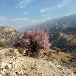 خدایا شکرت .... ندیدم تو وسط زمستان شکوفه بدن درختا اونم تو سردترین نقطه ایلام ،،کبیر کوه،، :'(  ... خدایا خودت بهمون رحم کن