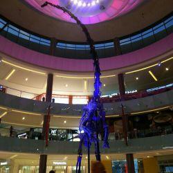 دایناسور 155 میلیون ساله كه در آمریكا كشف شده و به Dubai mall انتقال یافته! وزن معادل 7 ماشین سواری و ارتفاع معادل7.6m