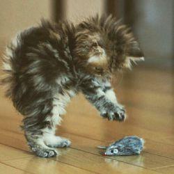 همیشه نباید گربه بود و هر موشی را شکار نباید کرد. گاهی لازمه مثل تام و جری رفیق باشیم :-)