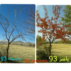 از پاییز به زمستان و در انتظار بهار برای رویشی نو