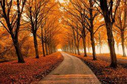 خوشبختی گمشده ی همه ماست ...... مواظب باشیم اگر آن را پیدا کردیم ..... خودمان را گم نکنیم ....