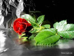 سلام دوستان این گل تقدیم به قلب زیبایتان.