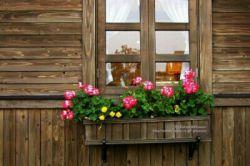 شادی در خانه ای هست که مهر و محبت در آن خانه باشد