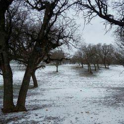 آخرین روزها ی زمستان