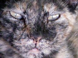 نگاه خشمگین