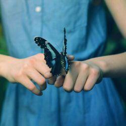 به زیبایی یک پروانه...