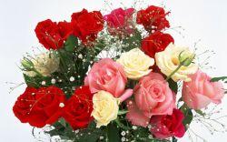 سلام این دسته گل تقدیم به همه شما دوستای لنزوری، که تو این مدت خیلی شرمندم کردین... ممنون از محبتای همتون.... التماس دعا...
