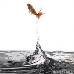 پرواز کرد عاقبت  ماهی که شوری دریا برای نمک گیر کردنش کافی نبود !