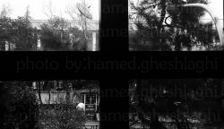 عکس از حامد قشلاقی