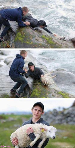 این دو مرد نروژی به این ترتیب، به کمک این بچه گوسفند شتافتهاند تا در دریا غرق نشود.