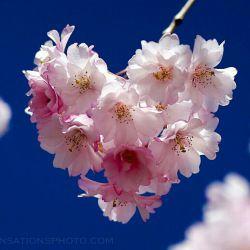 عزیزانم پیامبر ص میگوید هر وقت بهار را دیدید یاد قیامت کنید