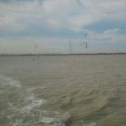 من و دریا و مرغ های دریایی^_^