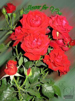 سال نو پیشاپیش بر همگی شما مبارک باد .و این گلها تقدیم به همه شما دوستان عزیز.