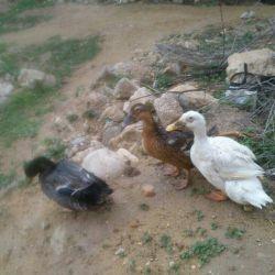 دیروز یوهویی خونواده ی اردک ها...