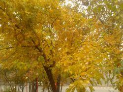 #طبیعت #شمال #تهران     ///پاییز رو دوس دارم ولی .........................شهرمون هیچوقت پاییز نداره