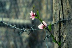خار خندید و به گل گفت سلام و جوابی نشنید خار رنجید ولی هیچ نگفت ساعتی چند گذشت گل چه زیبا شده بود دست بی رحمی نزدیک آمد،گل سراسیمه ز وحشت افسرد لیک آن خار در آن دست خلید و گل از مرگ رهید صبح فردا که رسید خار با شبنمی از خواب پرید گل صمیمانه به او گفت سلام... گل اگر خار نداشت دل اگر بی غم بود اگر از بهر كبوتر قفسی تنگ نبود، زندگی عشق اسارت قهر و آشتی  همه بی معنا بود...