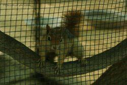 سنجابی در قفس