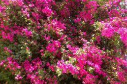این هم گلهای جدید تقدیم به همه دوستای لنزوریم ^_^